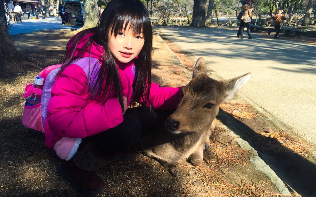 Angela319♥Taiwan國外親子遊第3個城市-關西 奈良day8(奈良公園 冰室神社)