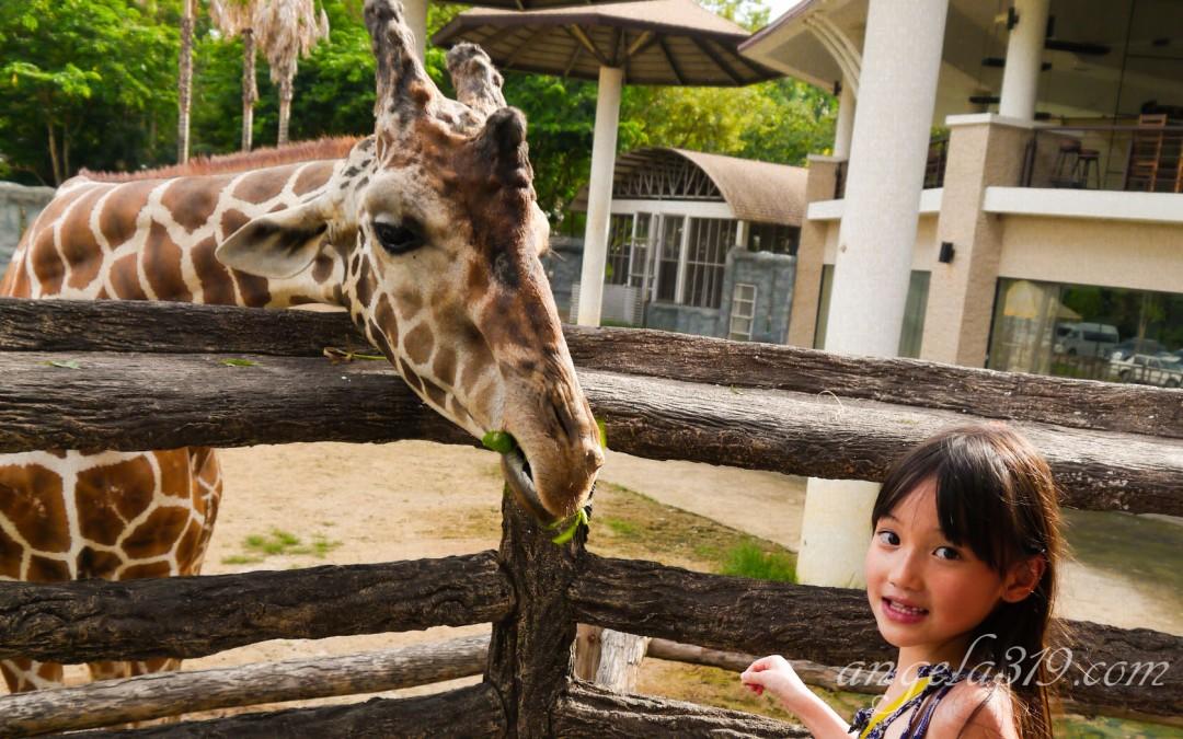 Angela319♥Taiwan國外親子遊第4個城市-泰國 清邁 夜間動物園 Night Safari