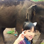 Angela319♥Taiwan國外親子遊第4個城市-泰國 清邁 照顧大象體驗:Elephant Jungle Sanctuary