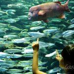 Angela319♥Taiwan國外親子遊第5個城市-東京  day1 池袋1日遊