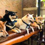 Angela319♥Taiwan國外親子遊第10個城市-華欣 INU CAFE